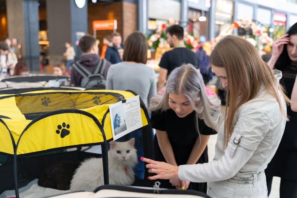 event - Выставка котов - март 2019